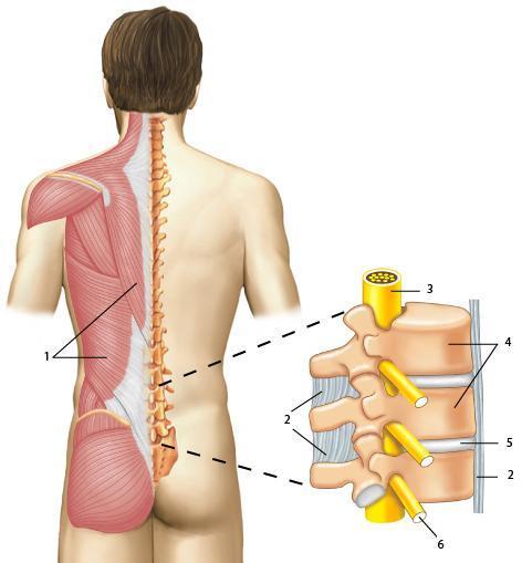 Массаж на воротниковую зону при шейном остеохондрозе