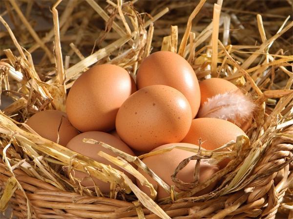 Срок годности яиц