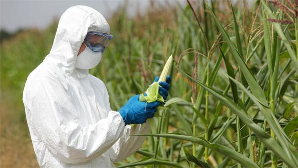 История ГМО продуктов питания