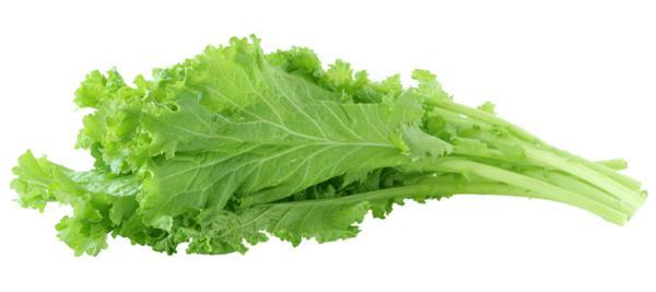 Молодые листья горчицы - отличный продукт для сжигания жира.