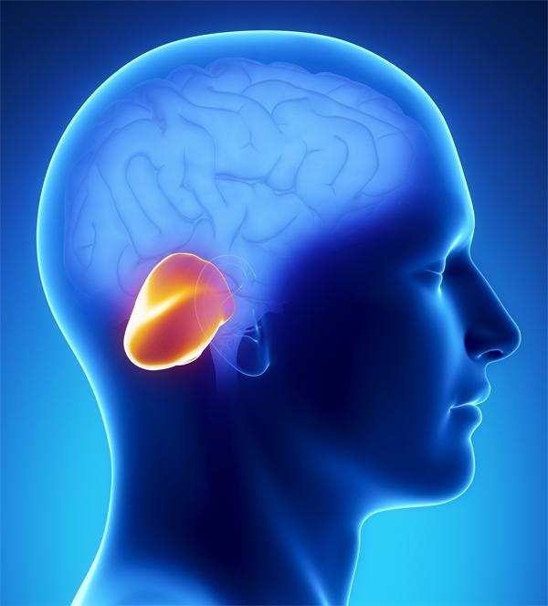 Анатомическое расположение мозжечка