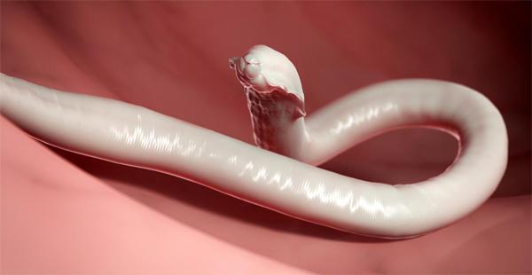 от кишечных паразитов