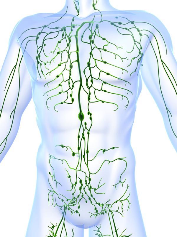 Увеличение лимфатических узлов в паху