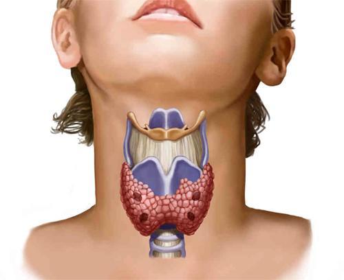 Эффективность щитовидной железы