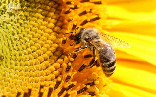 Солнечный мед