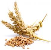 Что такое крупа из нешелушенной пшеницы?