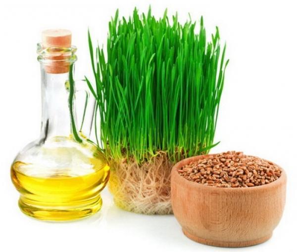 Польза масла зародышей пшеницы