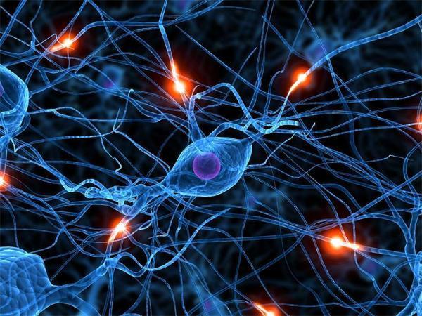 Нейрон в головном мозге