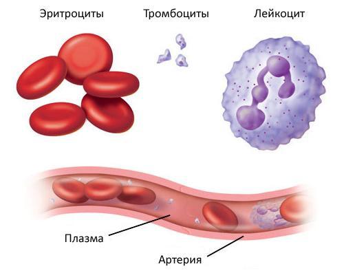 Кровь и ее компоненты