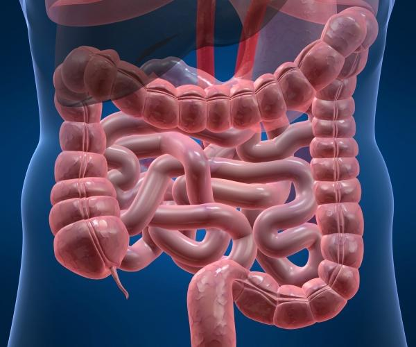 Лечение синдрома раздраженного кишечника пробиотиками