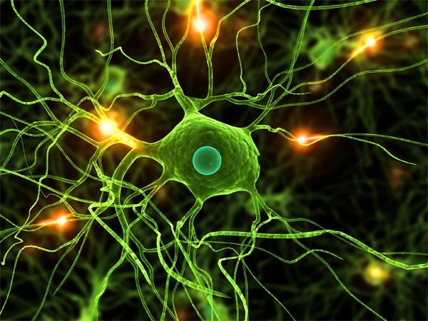 Нейрон в головном мозге человека