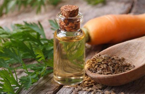 Чем полезно масло семян моркови и как его применять