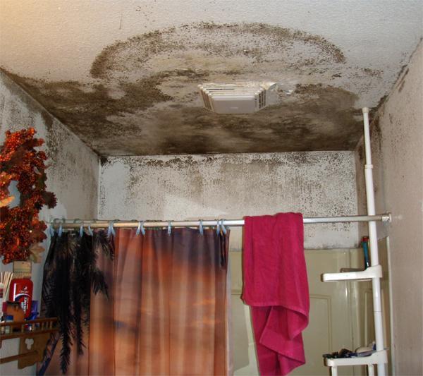 Чем опасна плесень в ванной комнате