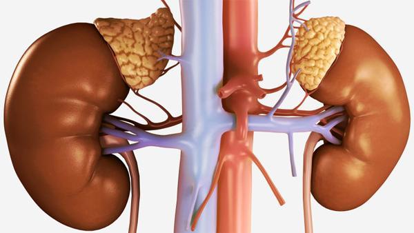 Что такое гормоны надпочечников?