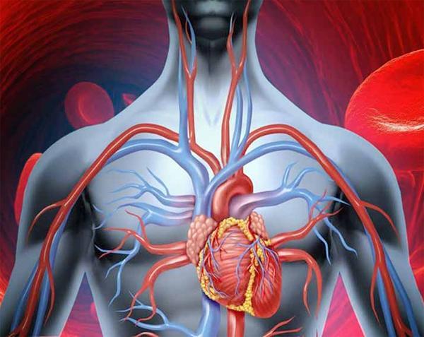 Причины плохой циркуляции крови в организме