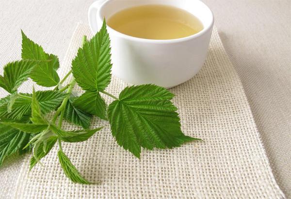 Чем чай из листьев малины полезен при беременности?