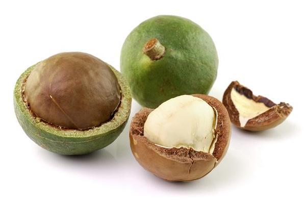 Питательная ценность орехов макадамия