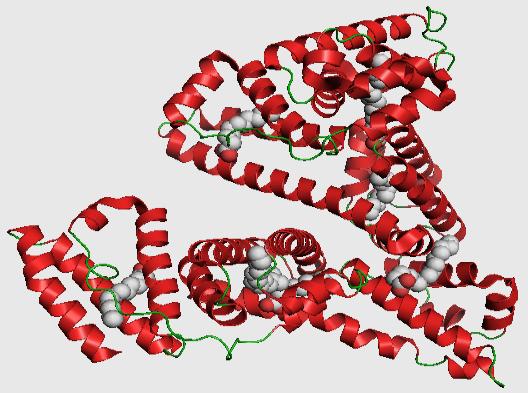 Самые важные фракции белков плазмы