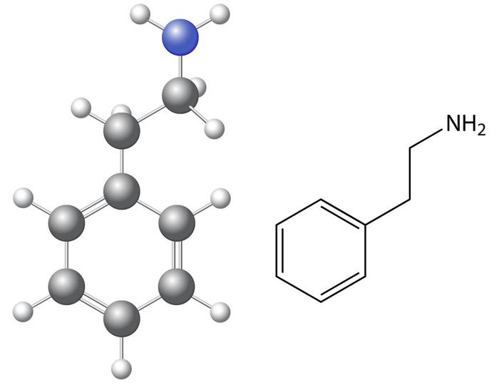 Что нужно знать о фенилэтиламине?