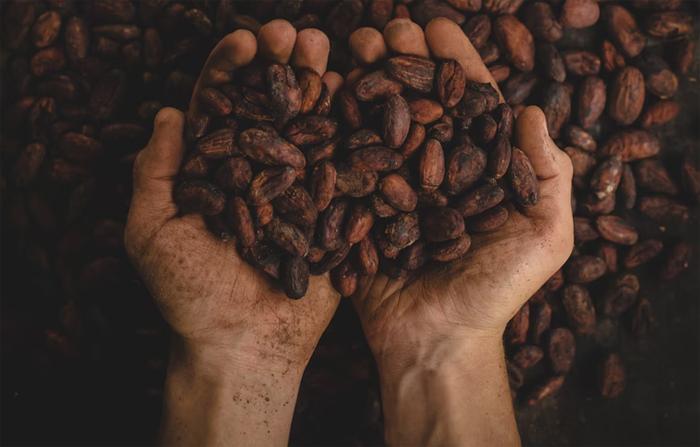 Может ли употребление какао помочь нам лучше стареть?